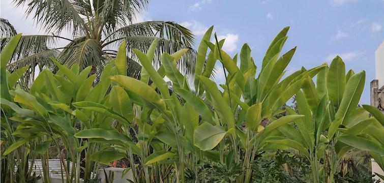 Den botaniske trend har efterhånden sat sig godt fast i interiørverdenen. Det er efterhånden en sjældenhed, men ser et hjem uden stueplanter. Vi er overbevist om, at 80'er-trenden med kaktusser og store stueplanter er kommet for at blive. Få desuden et godt tip, til dig der ønsker en altankasse specialdesignet til netop dig!