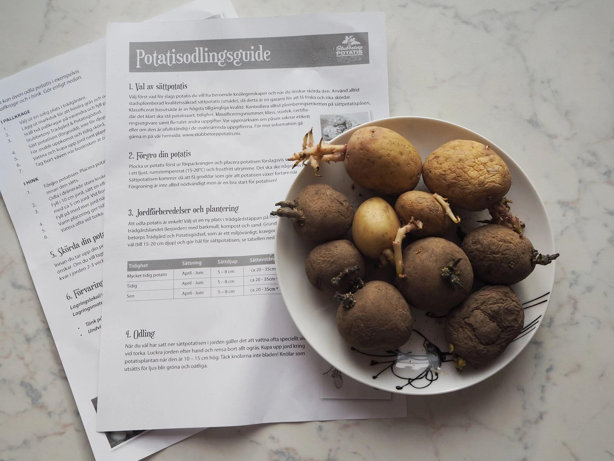 Malin testar - Odlar potatis i lägenheten