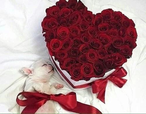 valentines day wantiieees