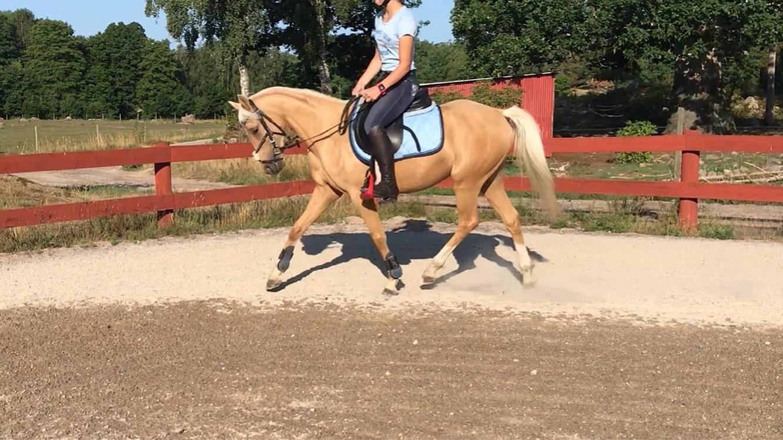 Ponny till salu