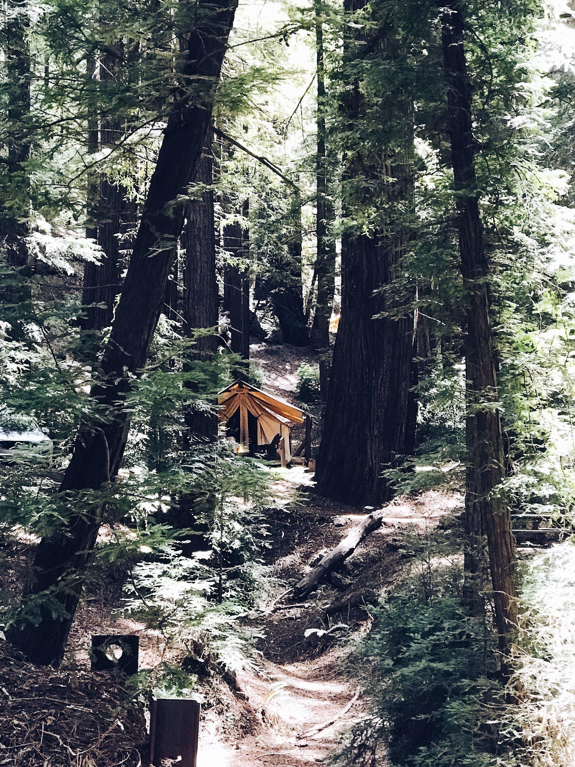 Dating Redwood stad