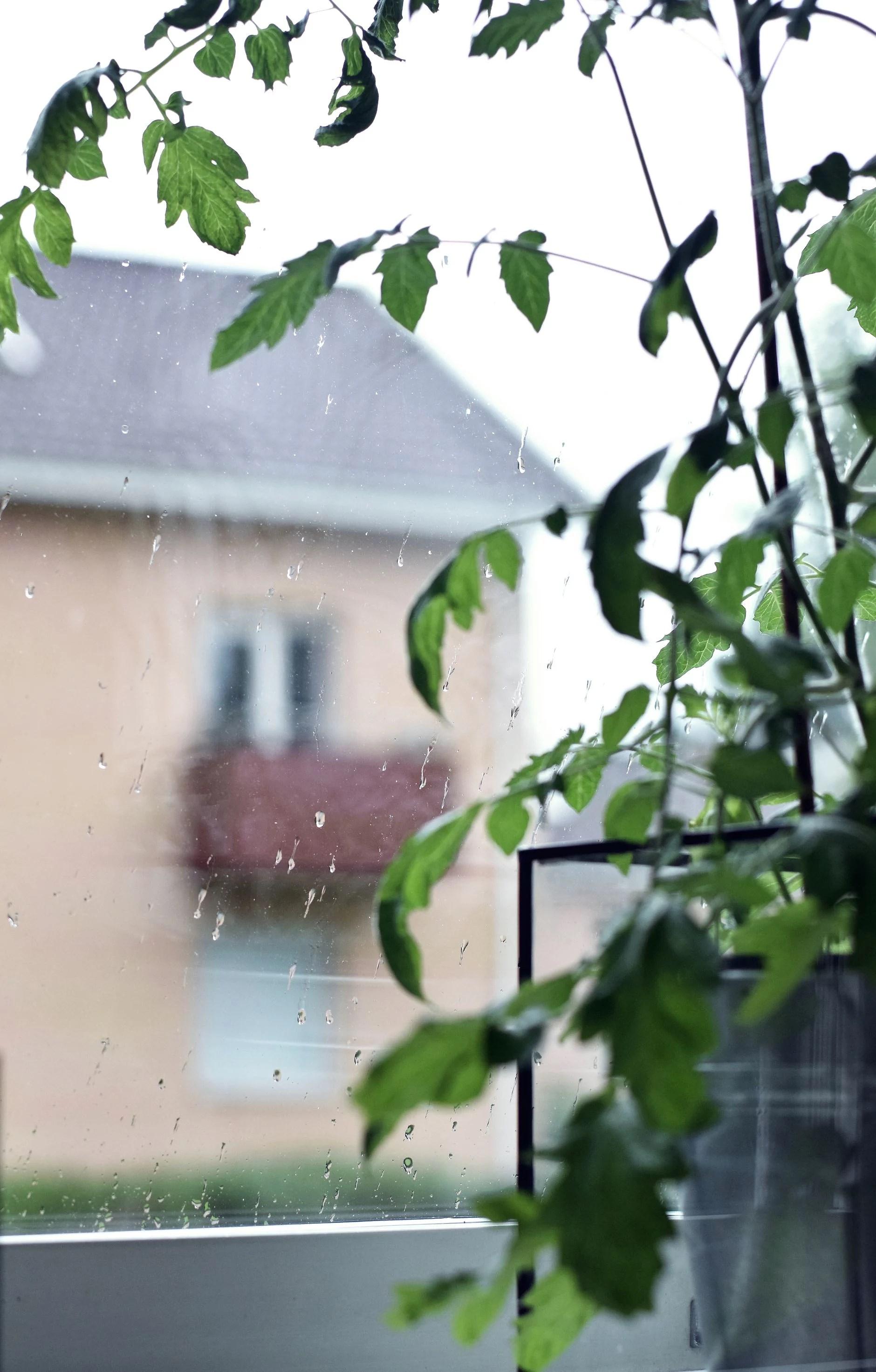 Vad är en svensk sommar utan..