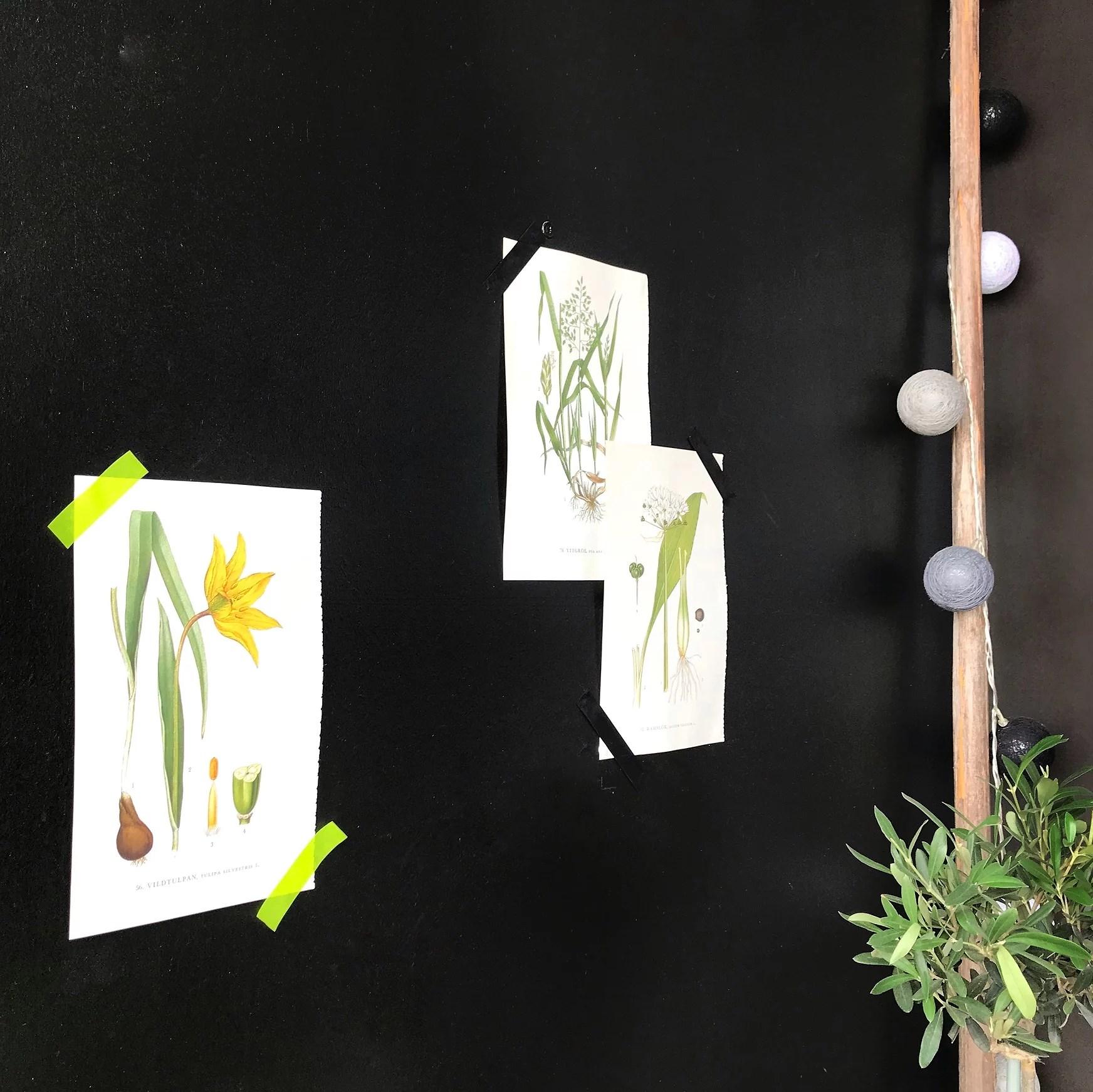 Flora. Blomprints. Botanik affisch. Botanik Poster. Loppisfynd. DIY.