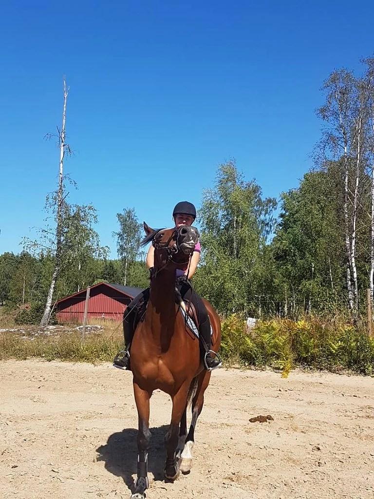 åkte till Brolöten för att hämta en häst...