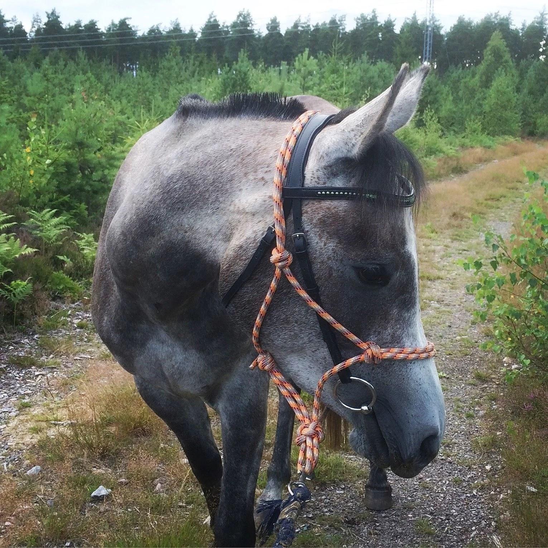 Gårdagen med hästmys