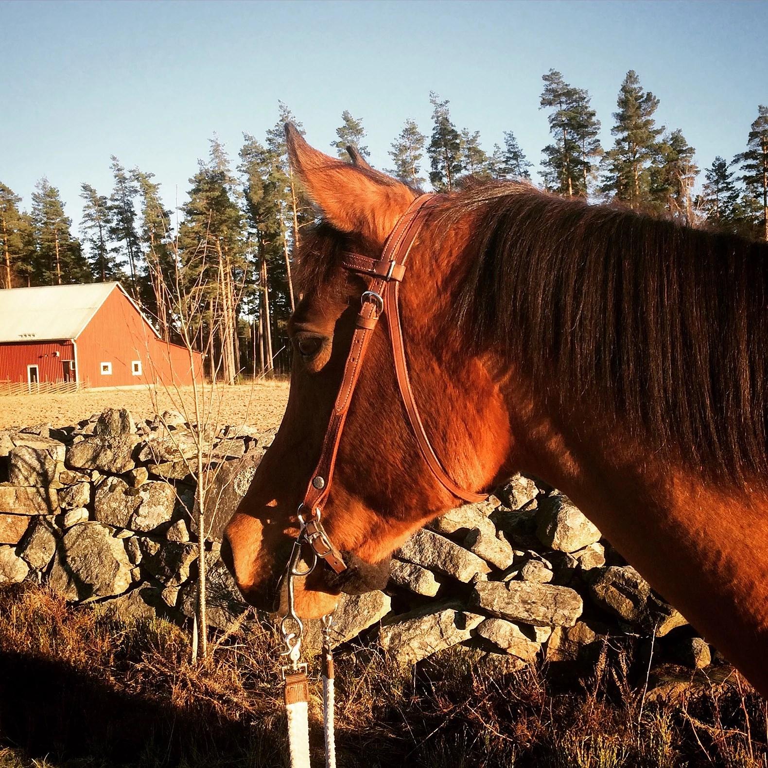 Hästarnas schema v16