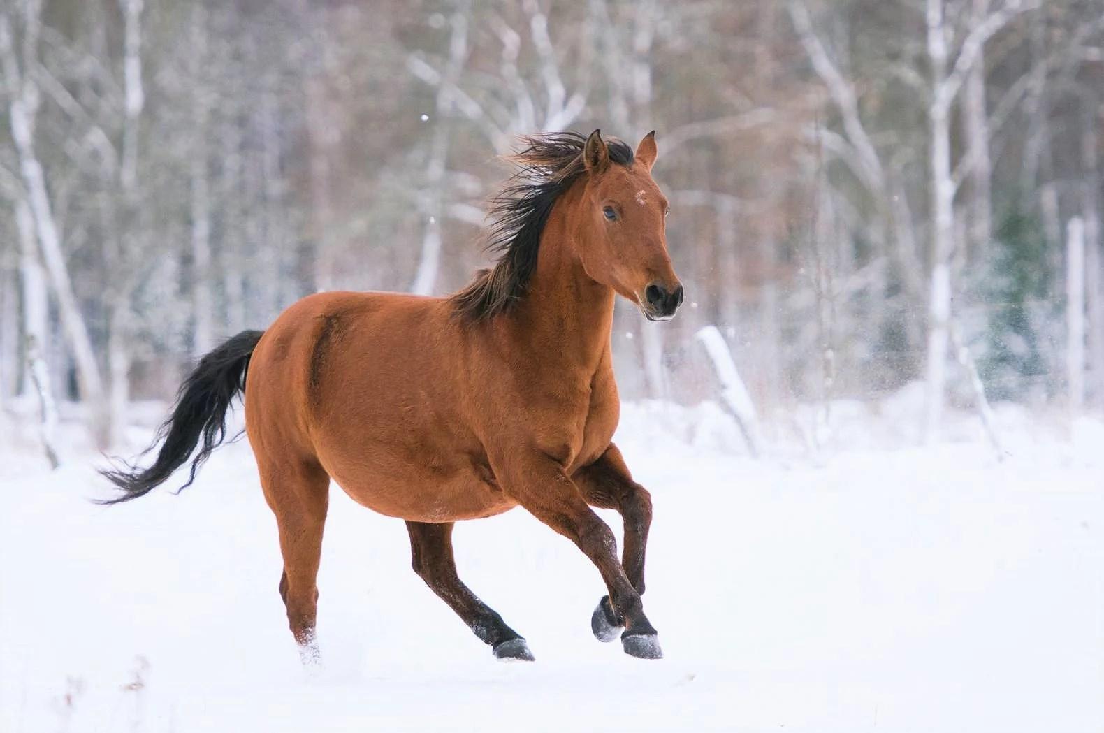 Mina ponnyer