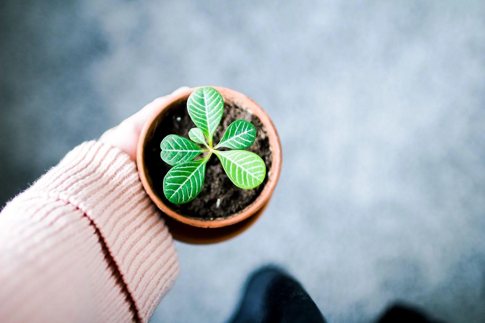 Konsten att få växter att överleva