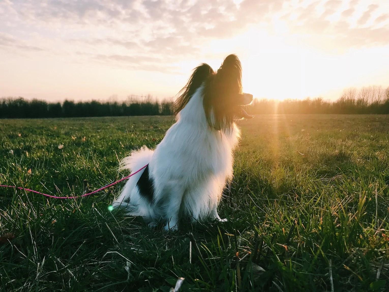 Promenad i solnedgången