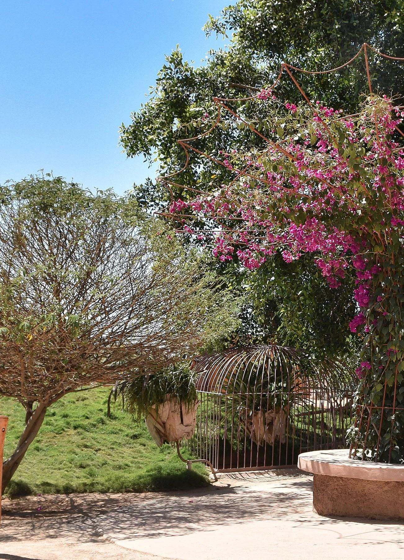 cactus-garden-agadir