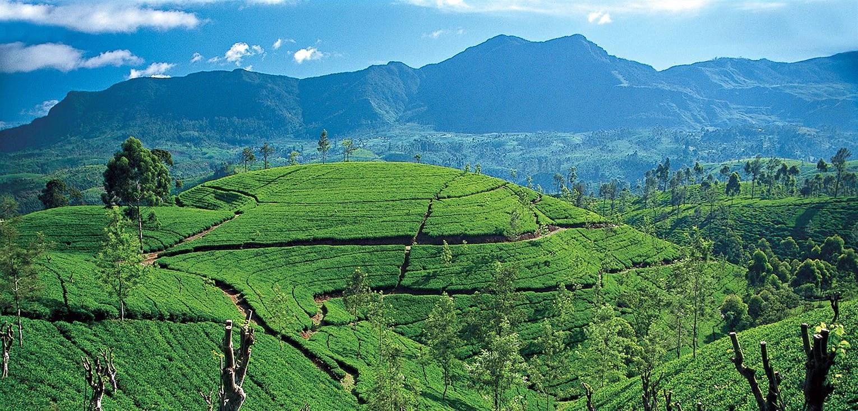 ceylon-tea-country-tea-trails-srilanka