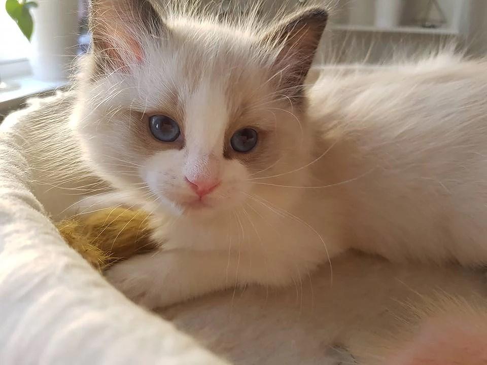 Casper ♡