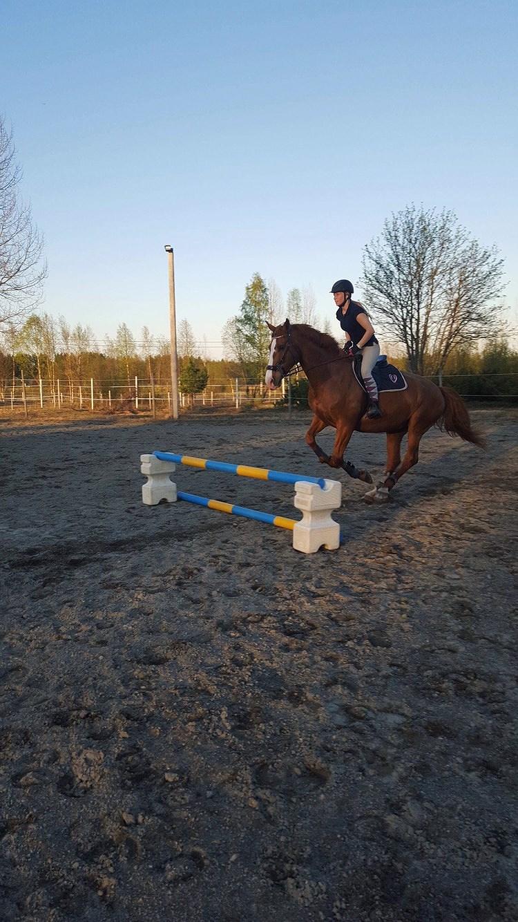 Maskkontroll på häst
