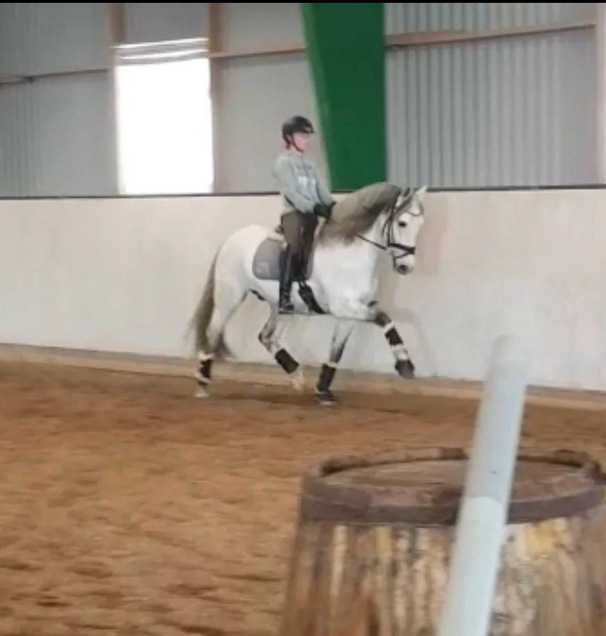 Ny häst