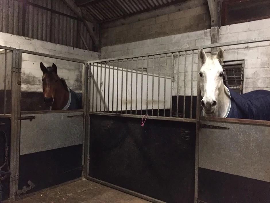 Dag tre - hästarna är hemma