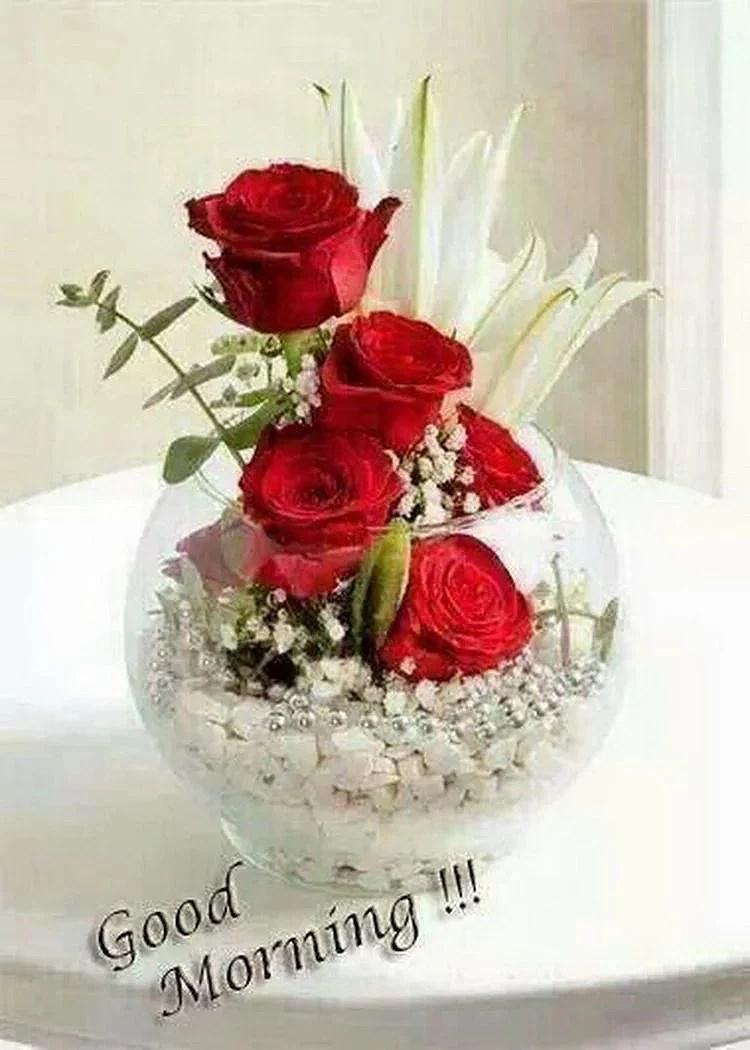 Good Morning Beautiful Red Rose Image : Ikke gi opp therockinkchick