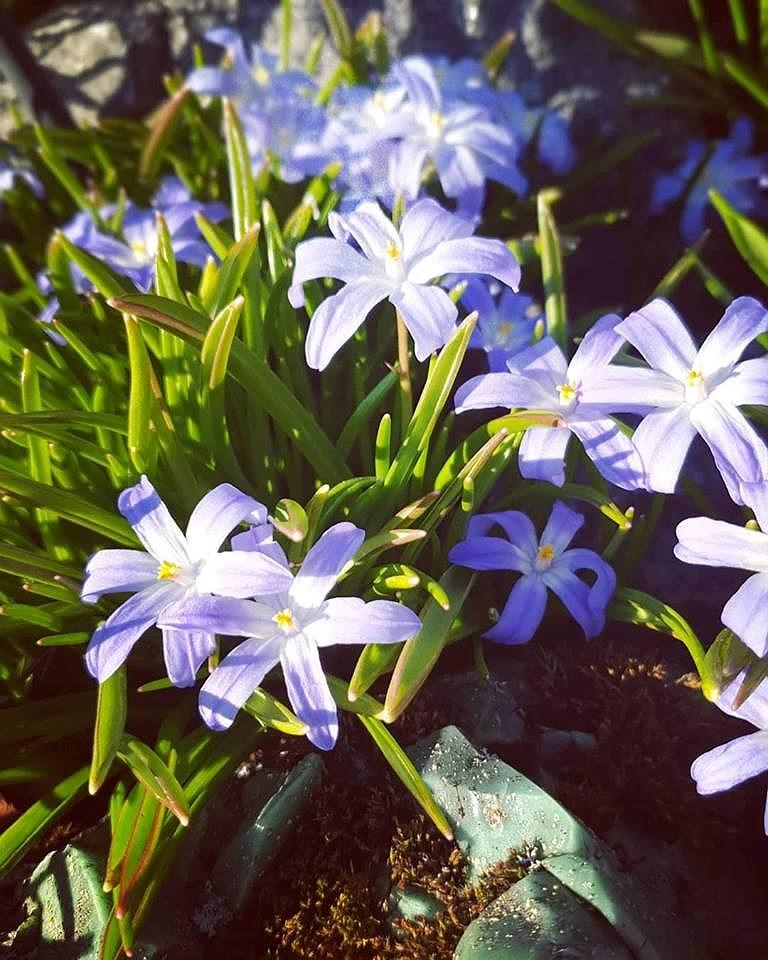 Våren är här!