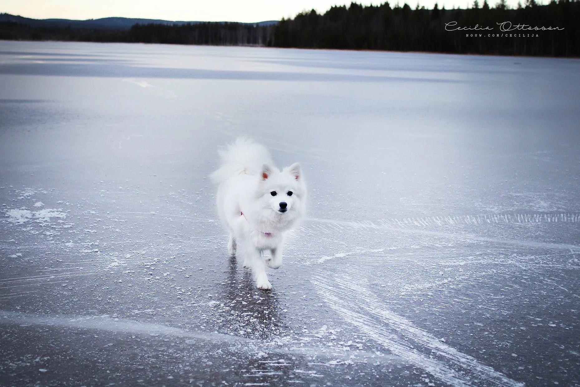 ute på isen