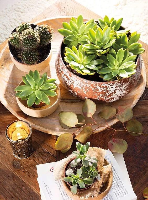 Deco: Centro de mesa con plantas crasas o suculentas