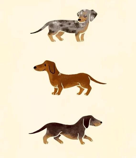 seusagedog