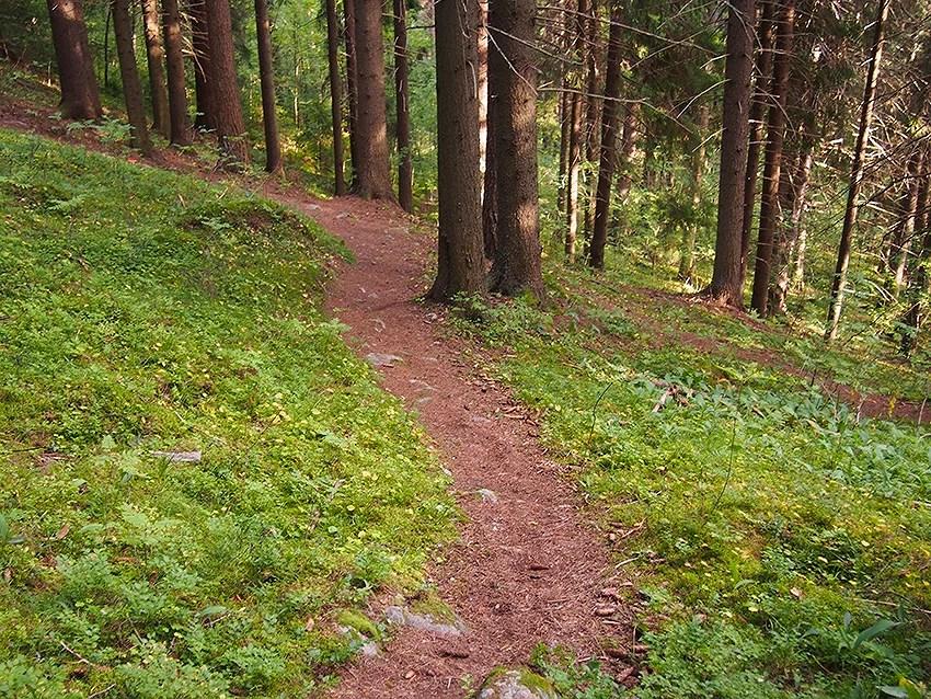 metsä-puijo-kuopio-1