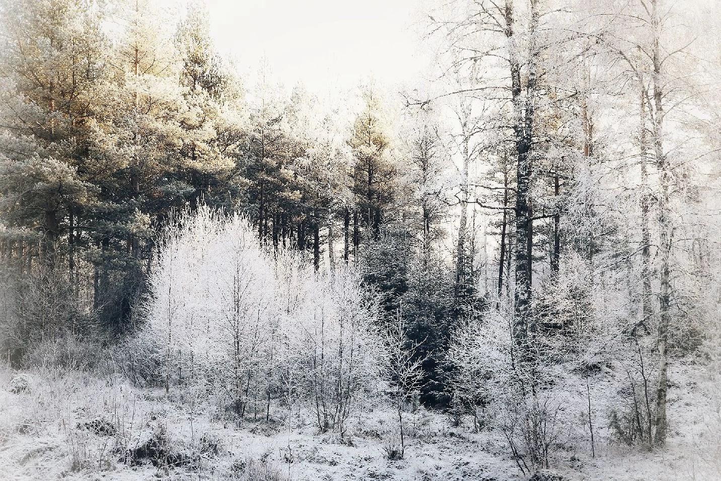 Winter wonderland ♡