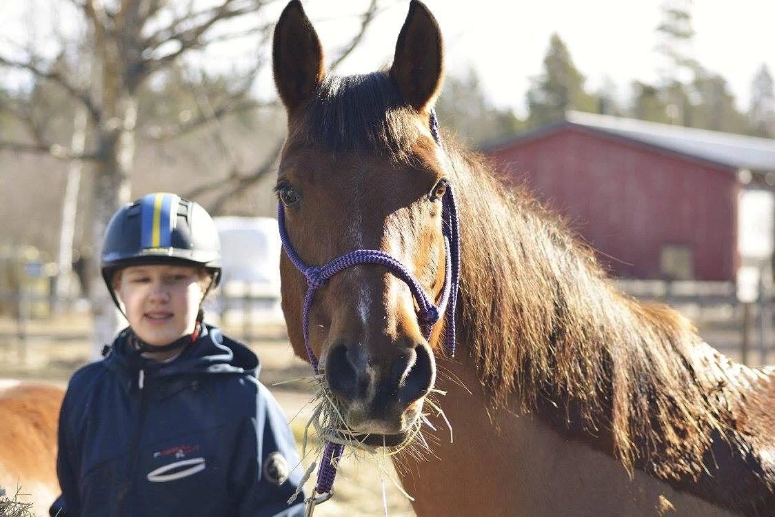 Hästarnas schema v13