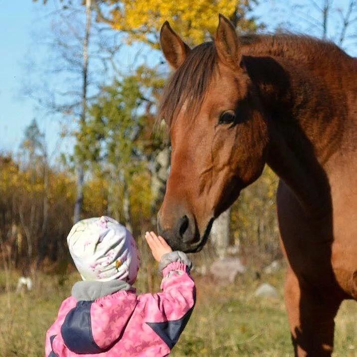 Hästarnas schema V50