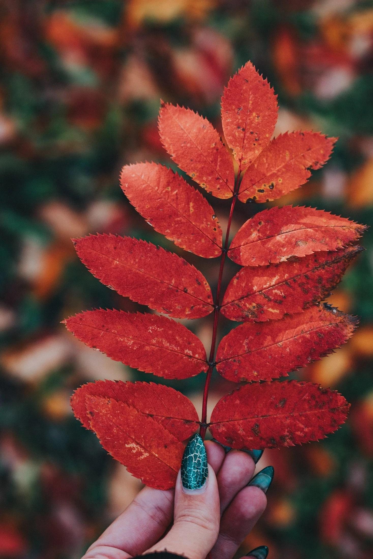 När varje löv är en blomma