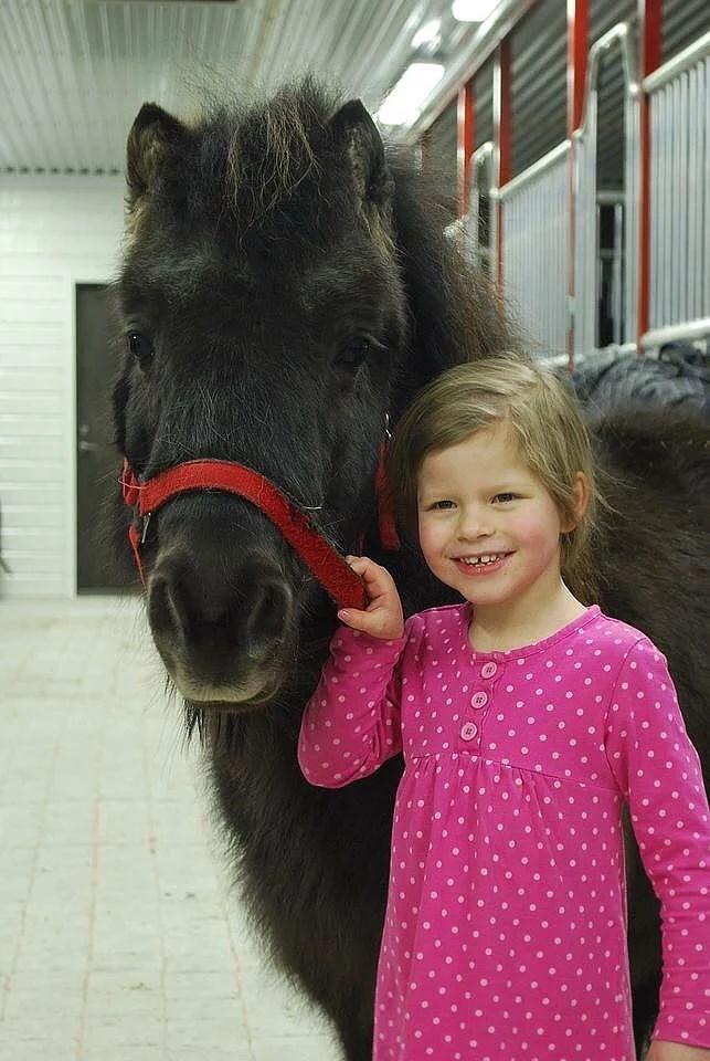 Alla våra hästar
