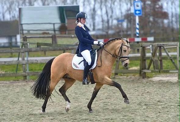 Superfin fei ponny