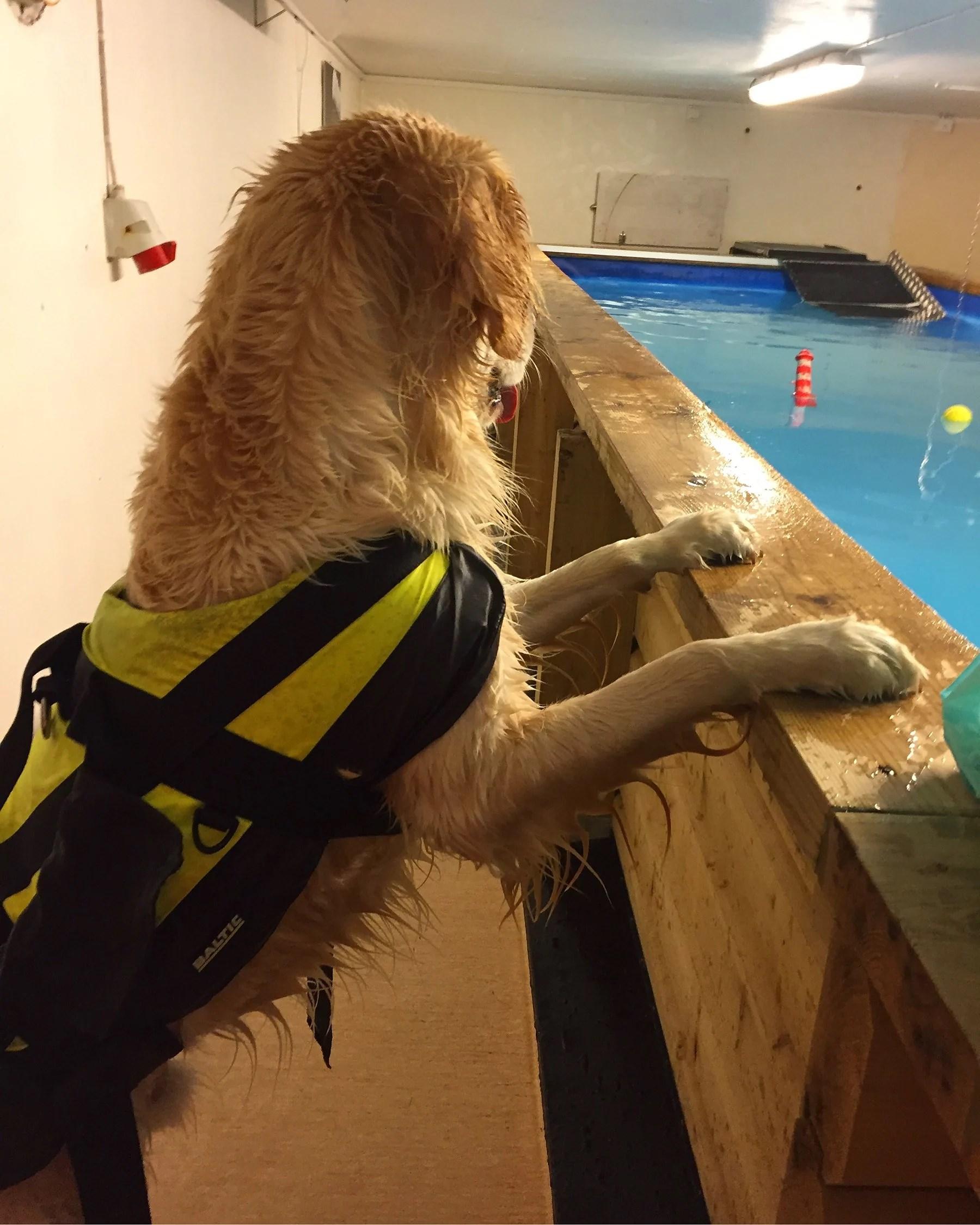Apporterande hund