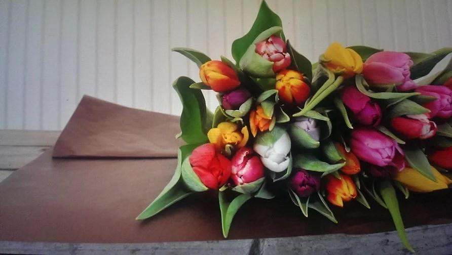 December låge nr. 5.      7 Gode råd til tulipaner. Flashback.