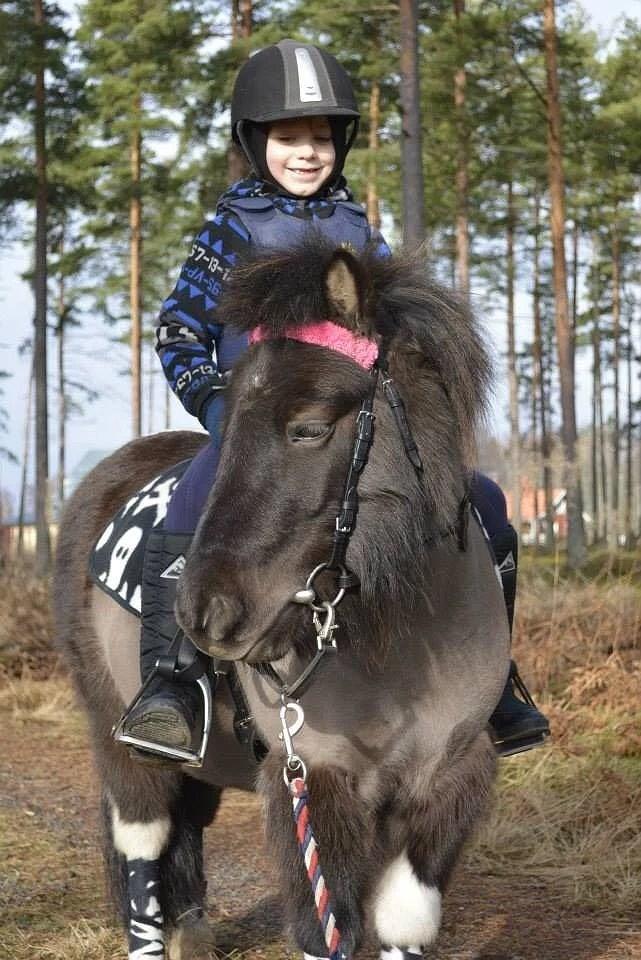 Hästarnas schema v17