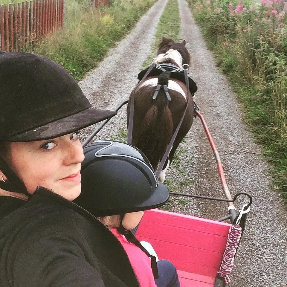 Hästarnas schema v33