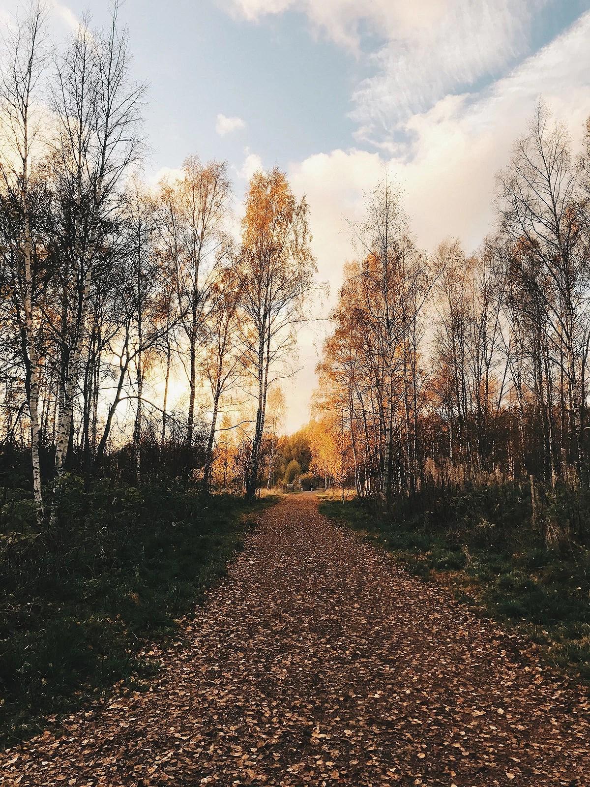 autumniphone2@johannaturpeinen