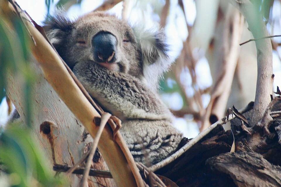 Läget i Australien