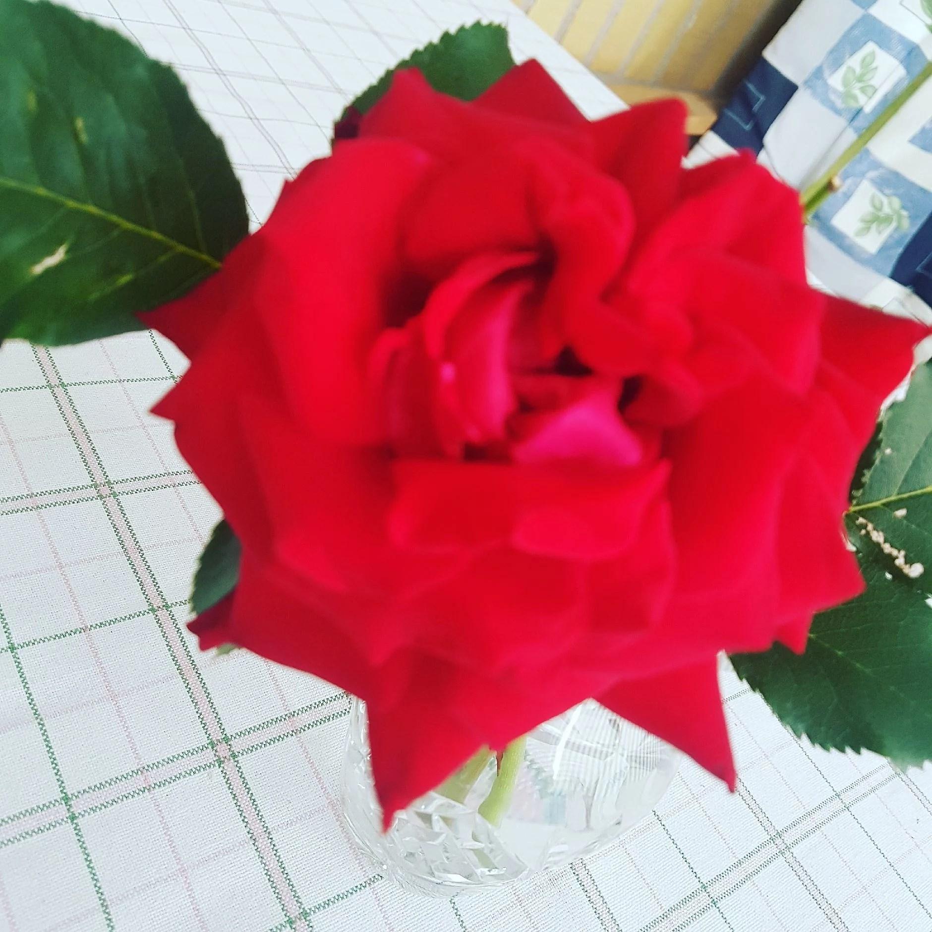 Kopiera - 💕 Helgen 💕