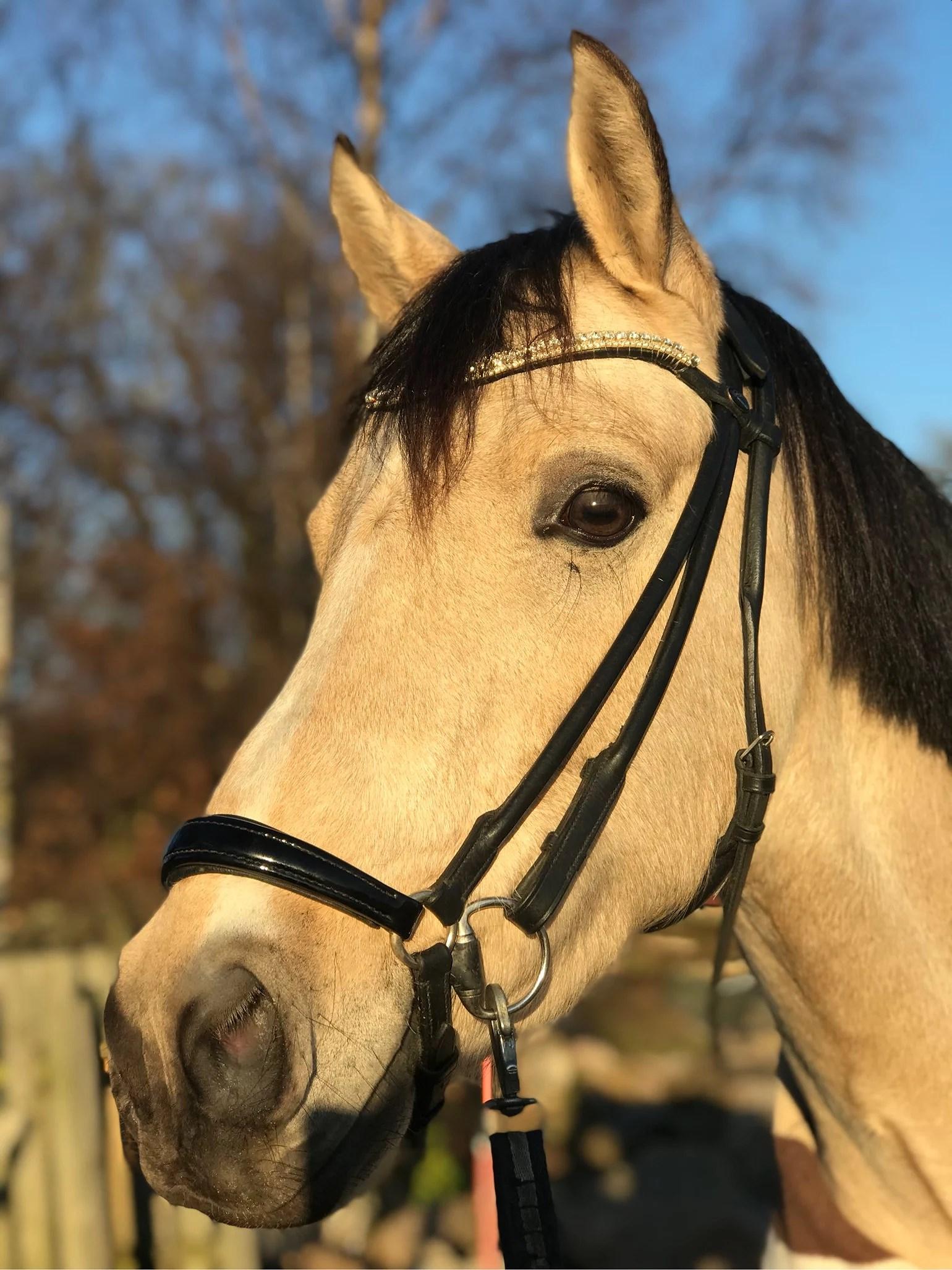 Ny träningshäst