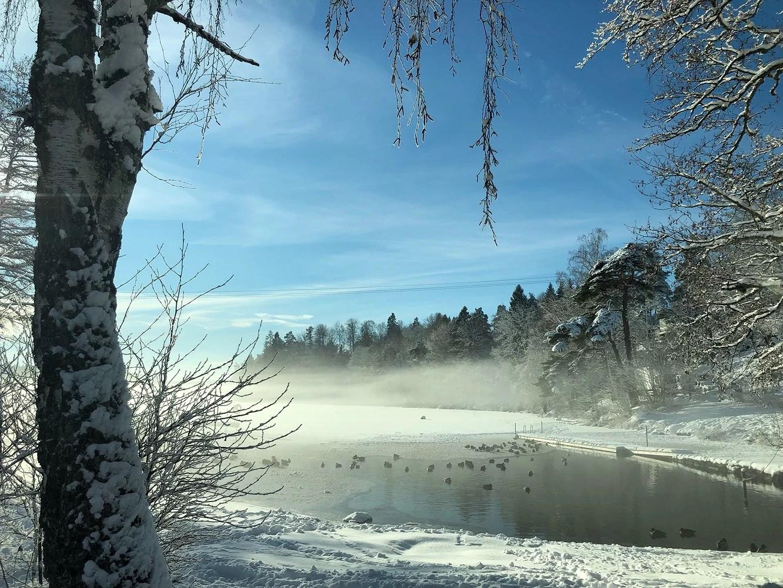 Vinterdag i solen