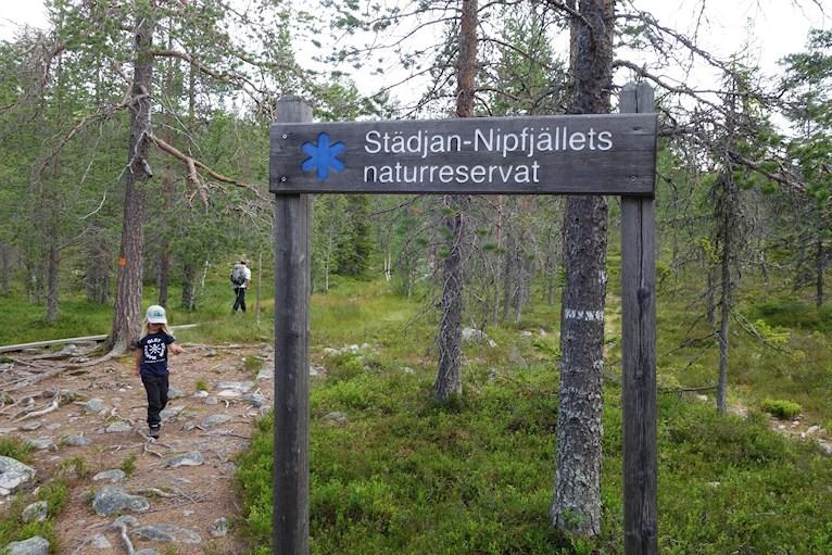Vandring bestiga städjan med barn Nipefjället naturreservat berg skog hemester svemester.