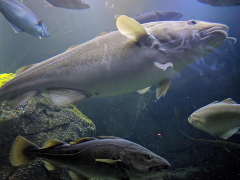 Universeum Göteborg hållbar intressant och rolig semester hemester för barn och vuxna akvarie med fiskar.