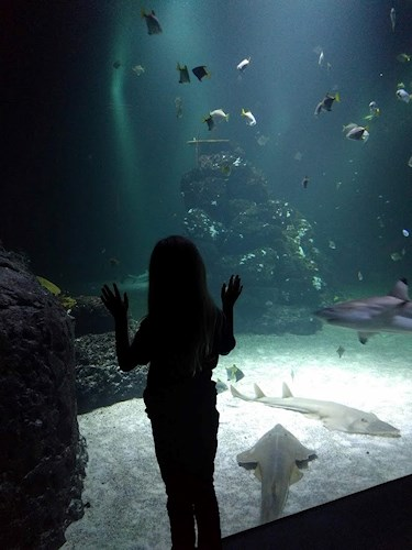 Universeum Göteborg hållbar intressant och rolig semester hemester för barn och vuxna framför akvarie med hajar rockor och andra fiskar.