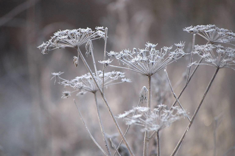 Naturens glitter och glamour