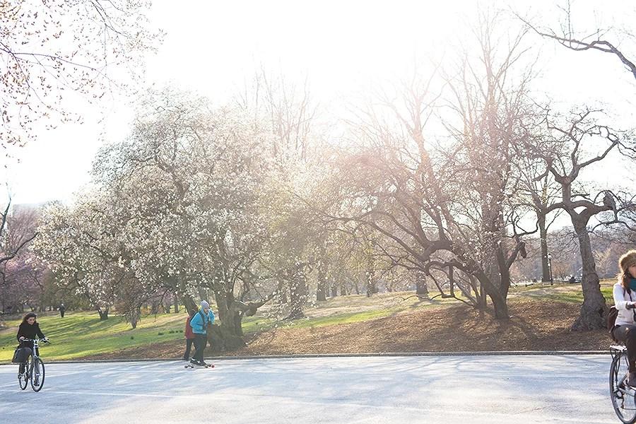 krist.in new york central park spring