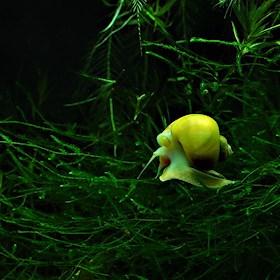 Akvariebloggen
