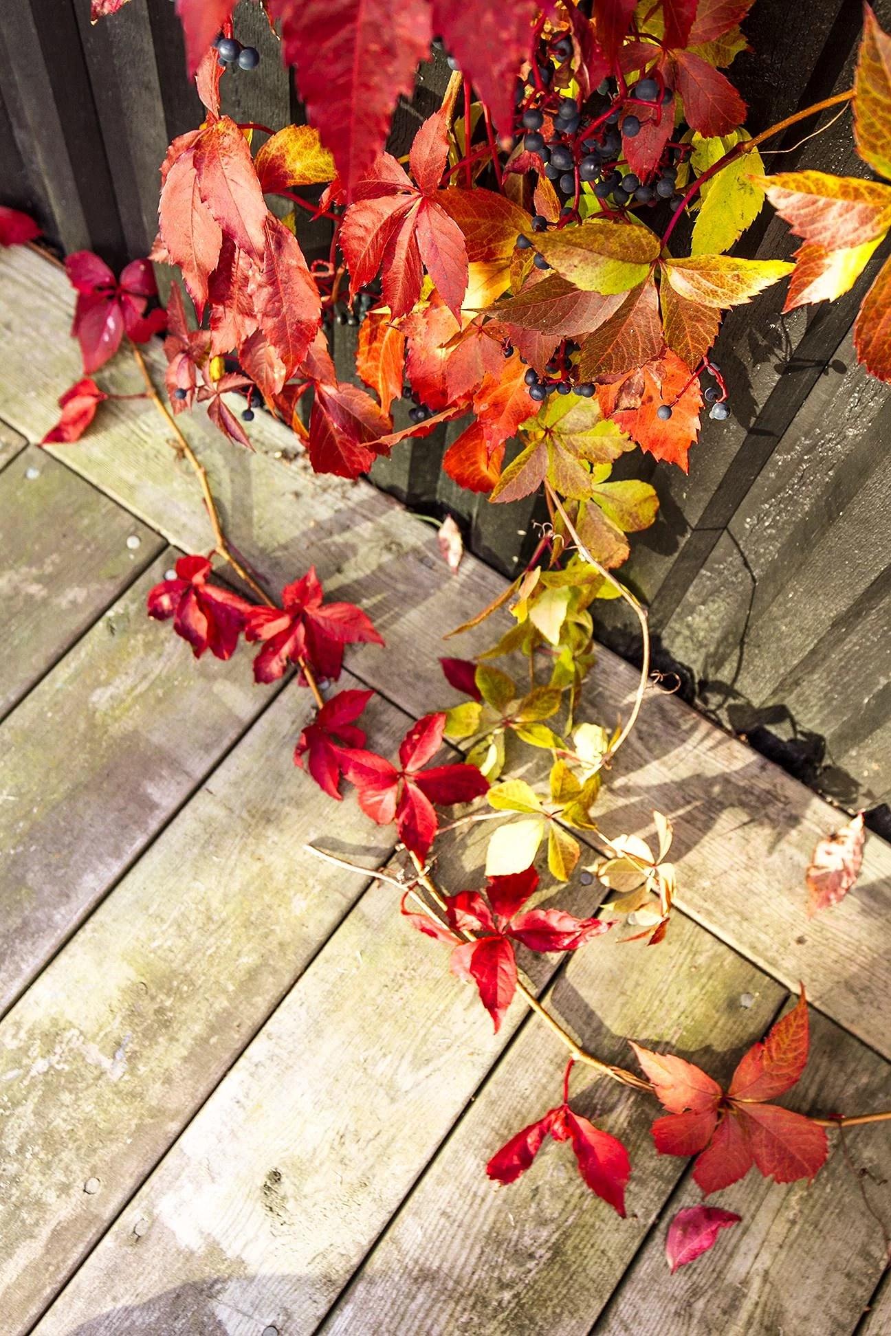 fallmadebyw8