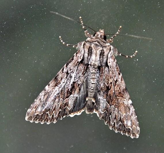 Min fjäril fobi