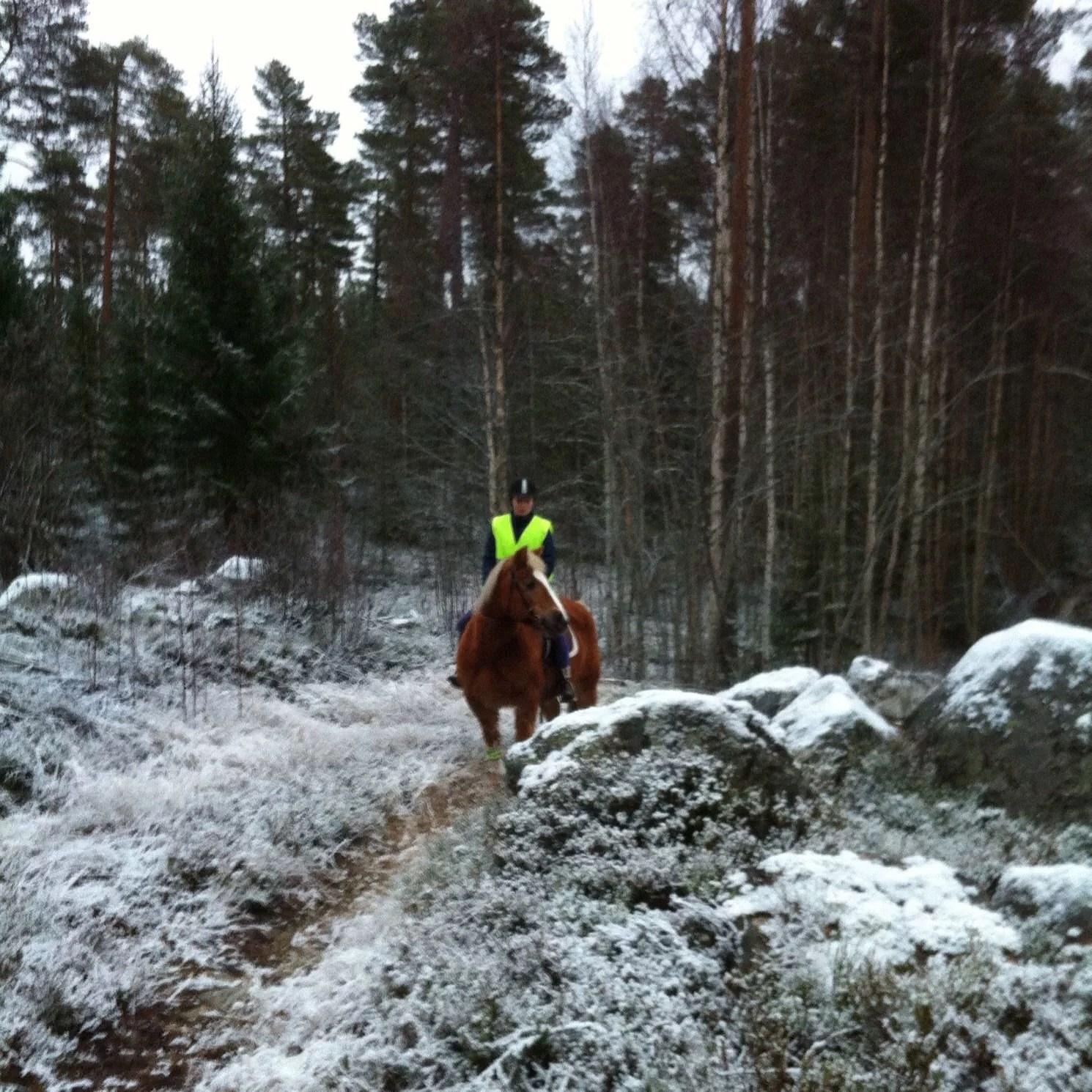 att dejta en hästtjej