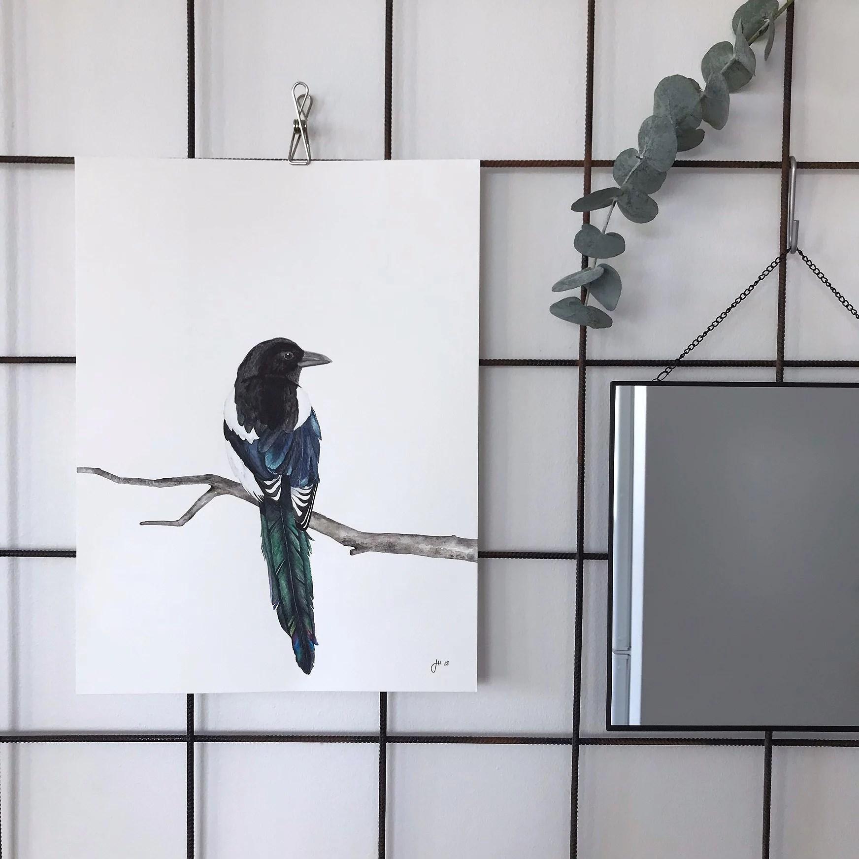 Skata. Akvarell. Magpie-print in watercolor.
